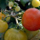 Uusissa hankkeissa tuetaan energiaomavaraisuutta ja kotitarveviljelyä