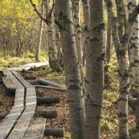Uusissa Leader-hankkeissa rakennetaan luontopolkuja ja kehitetään kylien turvallisuutta