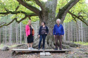 Kolme henkilöä tammen juurella